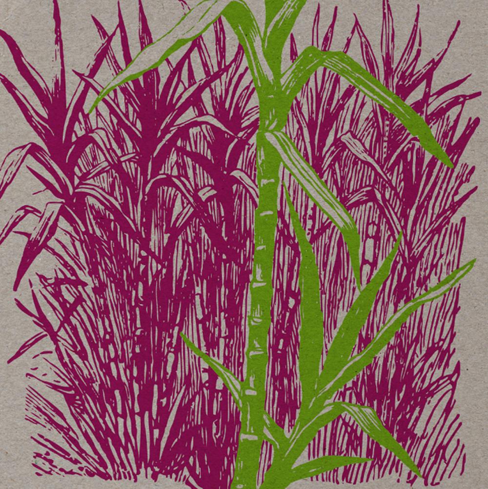 Cana de Acucar Printed v1